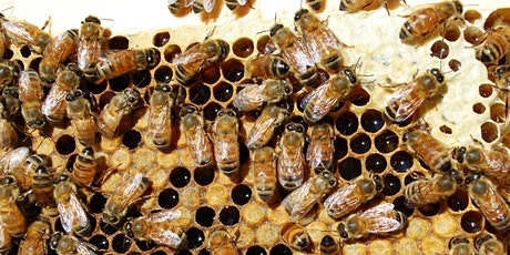 Bees Knees Presentation: 10.30AM tickets