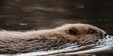 NHS STAFF EVENT: Evening Beaver Reintroduction talk-Cheshire Wildlife Trust tickets