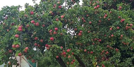 Apple  Picking at Sonairte tickets