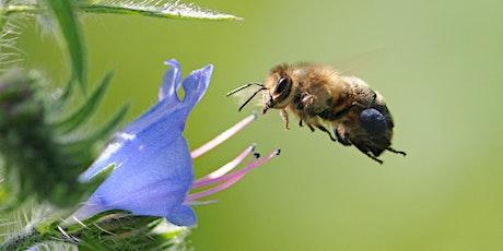 Responsible Beginners' Beekeeping tickets