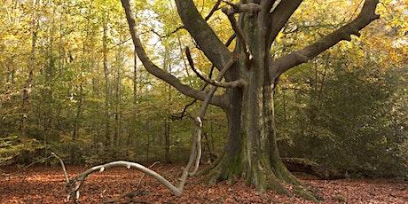 Tree ID walk in Ecclesall Woods tickets