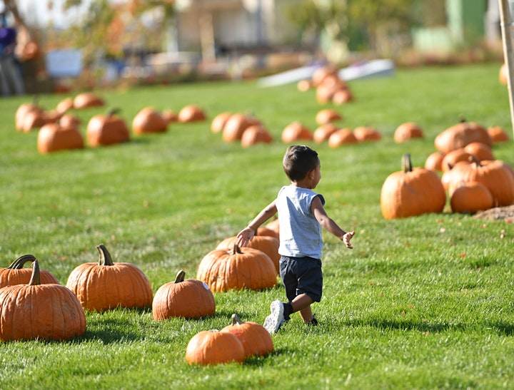 Prairie Harvest Fall Fest image