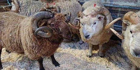 Flock Book and Fleece: A Conversation | Shetland Wool Week tickets