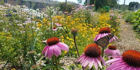 Native Perennial Plant Workshop tickets