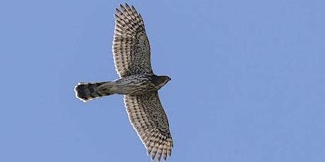 Greenbelt Adult Hike| Hawk Migration Walk tickets