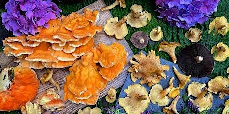 Foraging & Mushroom Dyeing Workshop tickets