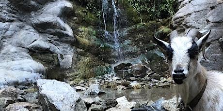 GOAT Waterfall Hike tickets