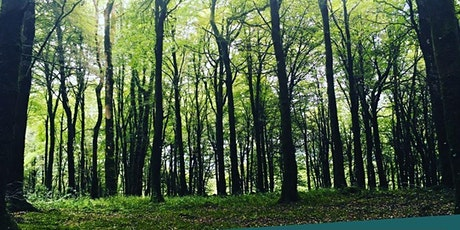 Mindful Outdoor Experience: Forest Bathing, Nature-Meditations ... tickets
