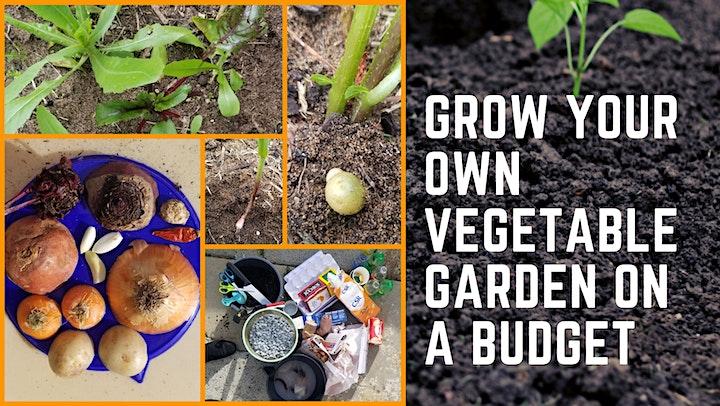 GROW YOUR OWN VEGETABLE GARDEN image