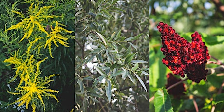 NEW DATE: Natural Dye Workshop - Goldenrod, Willow, & Sumac - SPACE LIMITED tickets