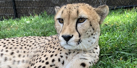 Breakfast with the Cheetah, September 18 tickets