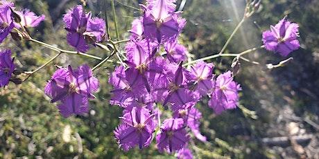 Noosa National Park Walk and Flower Essence Workshop tickets