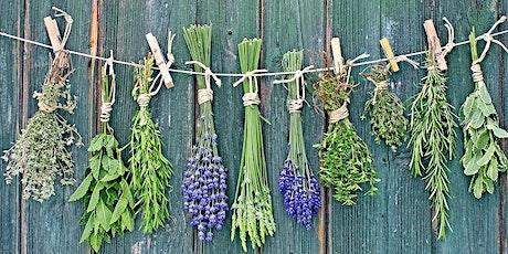 Rhizome Clinic - growing herbs to make medicine tickets