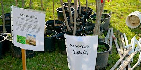 Tree Planting - Mannheim tickets