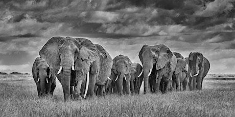 Kathy Karn - Elephants of Amboseli tickets