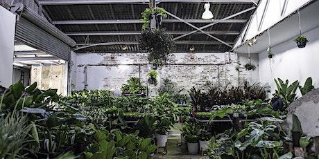 Canberra  Virtual Pop-up shop - Huge Indoor Plant Sale tickets