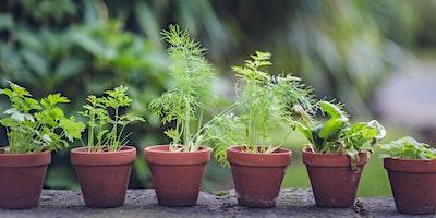 Grow herbs at home