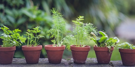 Grow herbs at home tickets