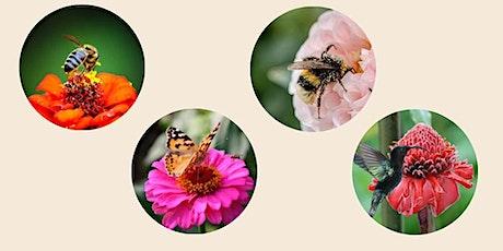 Little Buggers - Pollination Sensation! tickets