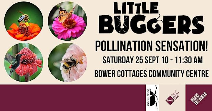 Little Buggers - Pollination Sensation! image