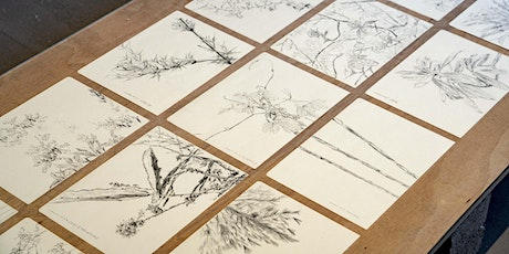 Liquid Ground | Drawing Plants Practice with Zheng Bo tickets