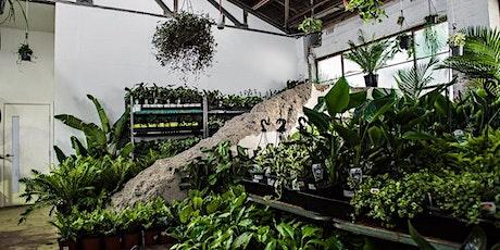 Geelong  Virtual Pop-up shop - Huge Indoor Plant Sale tickets