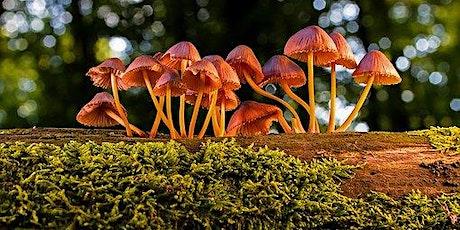 Fungus Foray / Helfa Ffyngau tickets