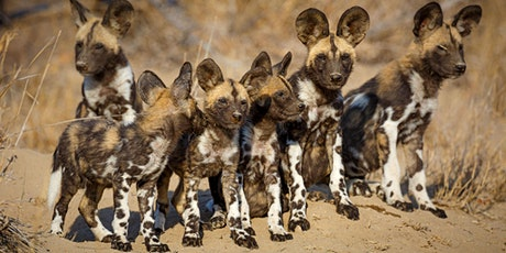 Remembering African Wild Dogs launch - live and virtual! tickets