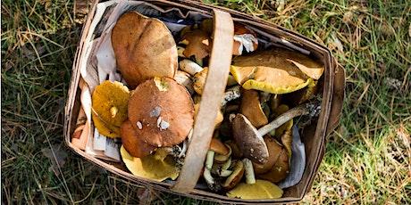 Wild Mushroom Foraging Walk tickets