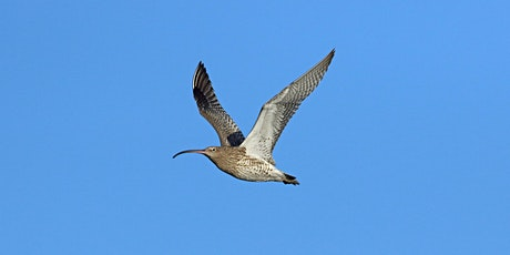 Waders and waterfowl at Tollesbury Wick Nature Reserve (EWT) tickets