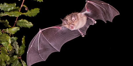 YACWAG Online Talk - Thomas Foxley: Protecting the Greater Horseshoe Bat tickets