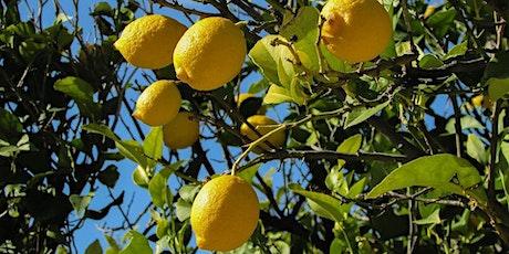 Poda de limonero by Anabel Didlaukis de GROWING AGRO entradas