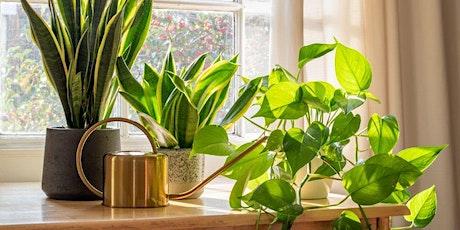 Riego en plantas de interior by María Lujan Armagno de Vivero Sta. Deolinda entradas