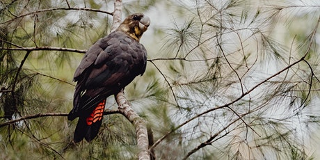 Kirbys Road Environmental Reserve Planting for Habitat tickets