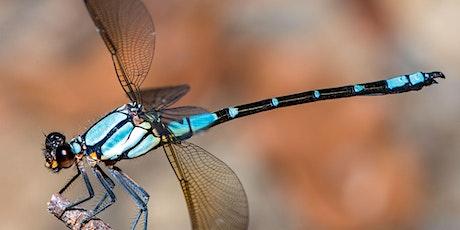 Gecko Talks September: Dragonflies and Damselflies tickets