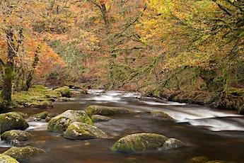 Pi Singles Autumn Dartington to Totnes River Walk tickets