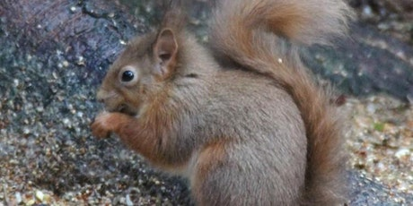 Red Squirrel Conservation in a Mathematical Nutshell with Andy White tickets