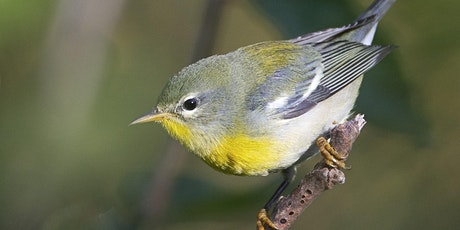 Birding with Joe: On the Hunt for Fall Migrants at Allen's Meadow tickets