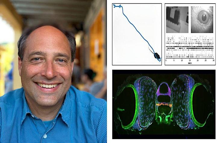 SWC Virtual Seminar -  Professor Cris Niell, University of Oregon image