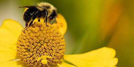 Virtual Garden Workshops - Growing a Pollinator Garden tickets