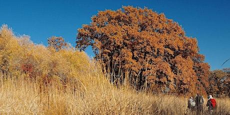 Fall Colors Walks tickets