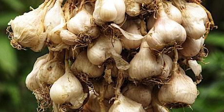 Virtual Garden Workshops - Growing Great Garlic tickets