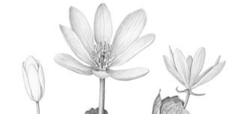 4-Week Botanical Illustration Class: Introduction for Beginners tickets