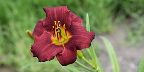 Daylily Dig tickets