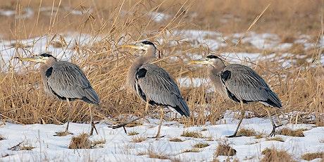 NatureKids BC - Beautiful Birds tickets