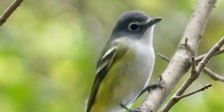 Fall Migrations Bird Walk tickets