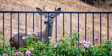 Planning A Deer-Resistant Garden - In-Person Workshop tickets