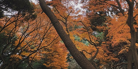 Fall Forest Bathing with A Greener Mind tickets