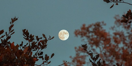 Full Moon Forest Bathing with A Greener Mind tickets