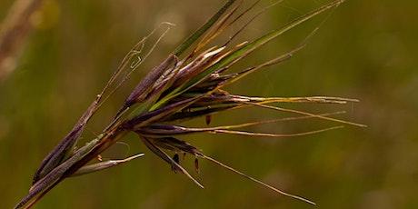 Grass and Pasture Identification Webinar entradas
